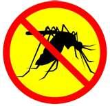 EEE Mosquito 2