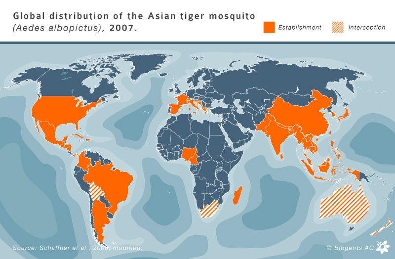 U S  cases of travel-associated Dengue fever reported to the