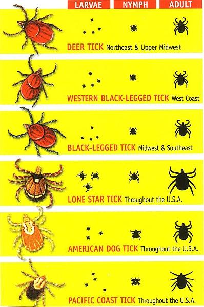 Rhode Island Tick Identifier