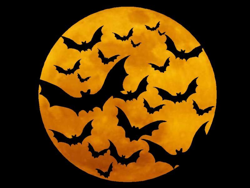 Image result for halloween bats