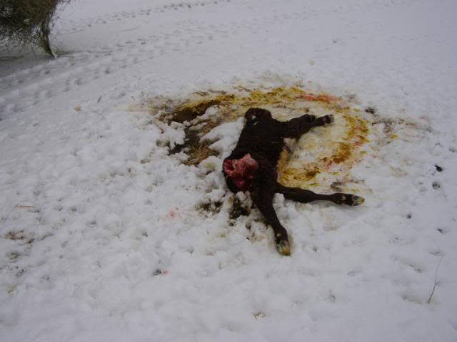 North Dakota; Rabies reports from Georgia, and North Carolina; Coyote ...