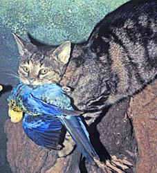 Feral Cat Litters Per Year Florida