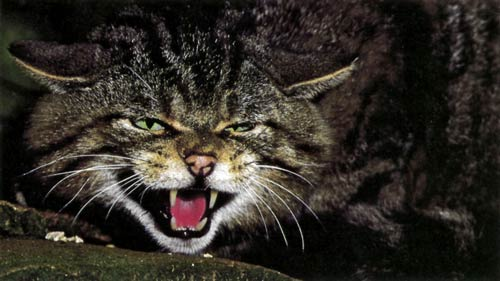 What Animals In Ohio Are Likely To Kill Cats