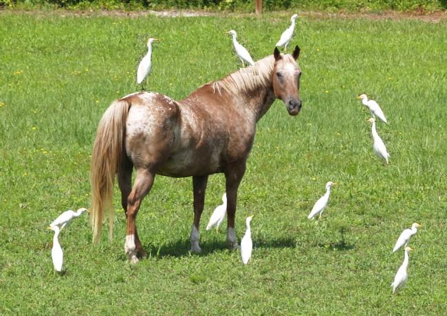 Two horses in Louisiana die of Eastern Equine Encephalitis ...