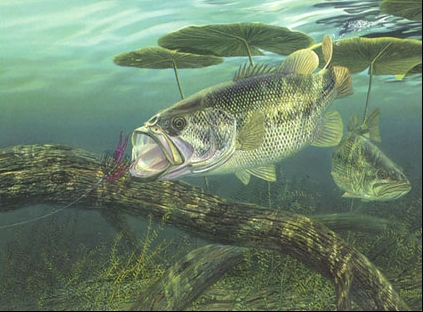 Bass natural unseen hazards blog for Bass fishing pictures