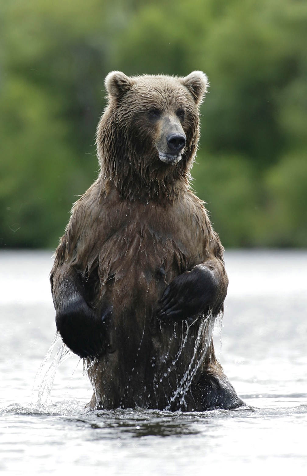 Teens on Alaska wilderness hike mauled by Brown Bears ...