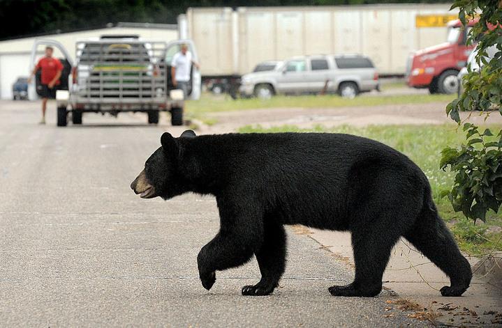 Scientists Track Alabama Bear Cub Survival Rate | WBHM 90.3