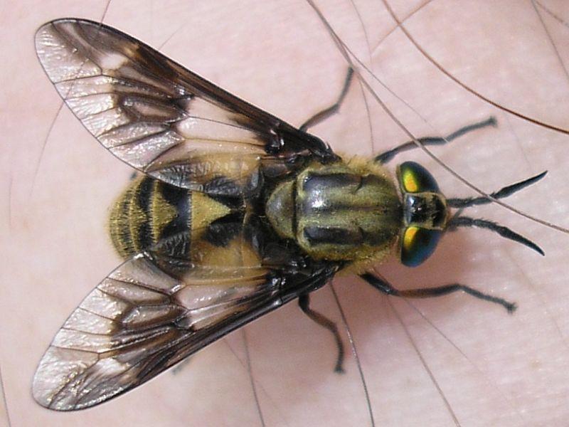 Washingtonians urged to avoid biting and stinging insects ... - photo#21