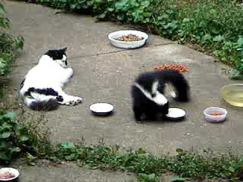 an overview of research on feeding behavior in feral and domestic cats Feral cats are usually considered to be and observation of social behavior from the cat in or domestic cats who have been abandoned or lost and.