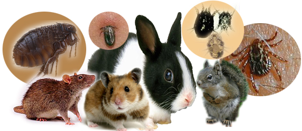 Natural Treatment For Tularemia