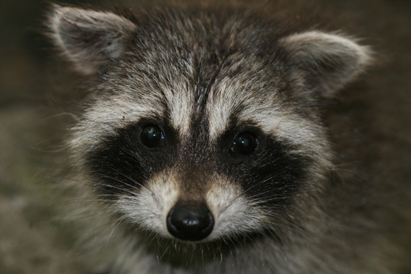 Natural Treatments For Rabies