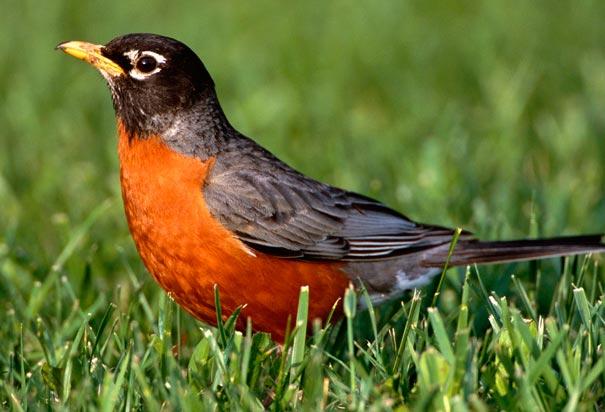 Robins Natural Health