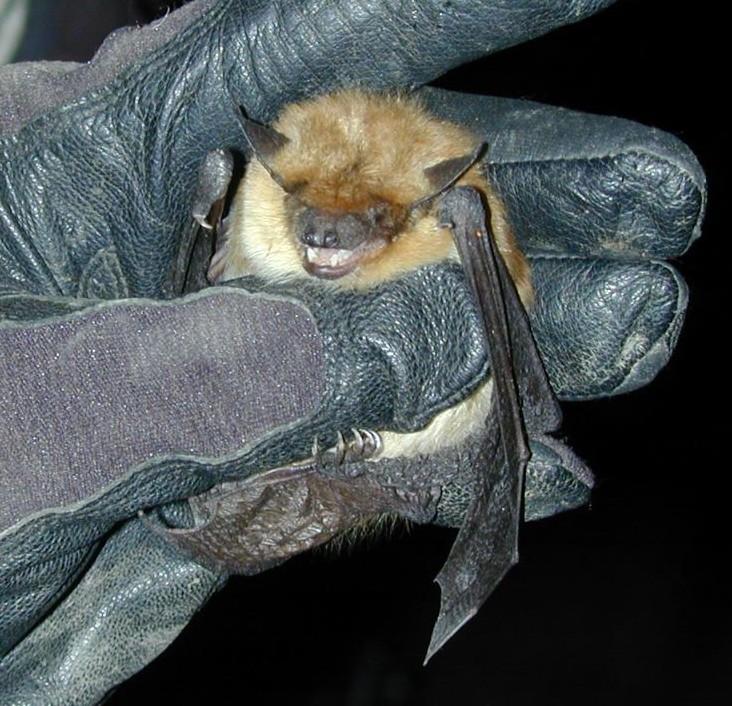 Cat Brings Bat For Human