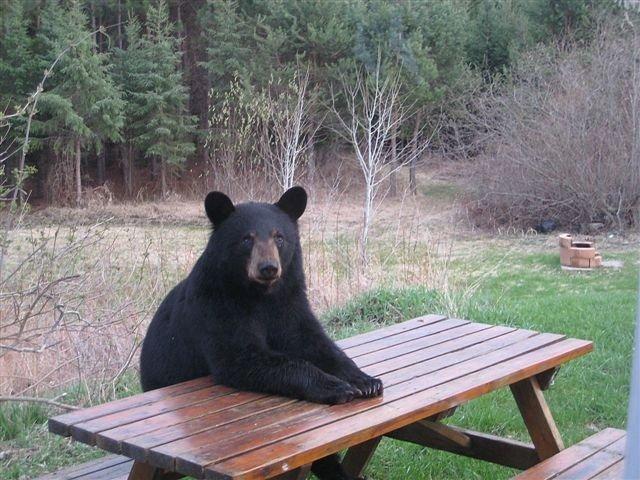 Black bear campground pa