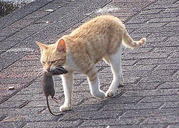 catfod-mouse_full.jpg