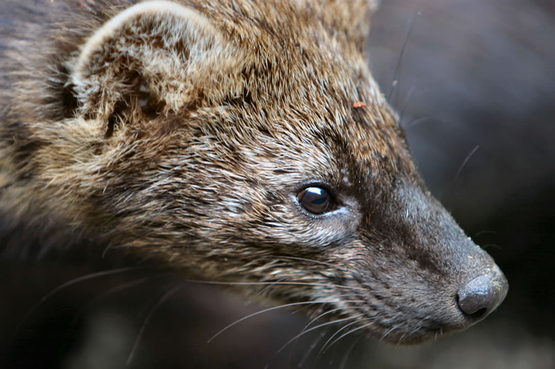 RHODE ISLAND WOMAN bitten by FISHER ~ Other RABIES reports from AL, NJ, PA, & VA ~ WEST NILE ...