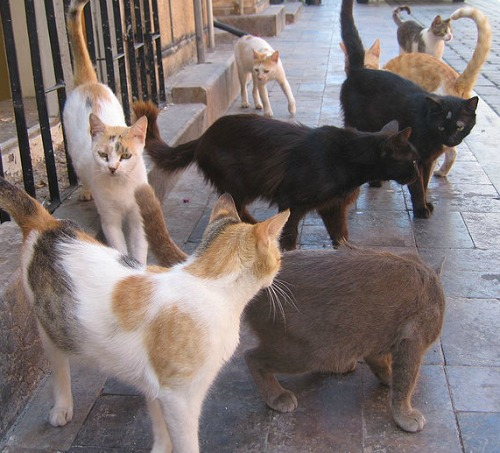 Feral cat colony. PD