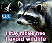 raccoonwildlife_CDC