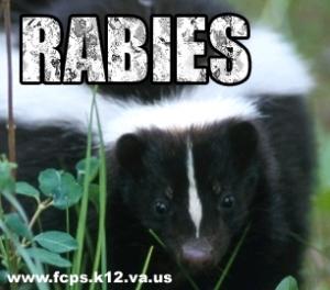 323rabies-skunk_medium