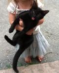 darlingcat-mattapoisett-Ma.gov