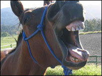 Horse%20Mouth