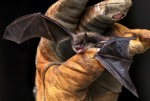 1055_bat2BrownBatWI