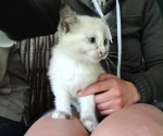 cute farm kitten