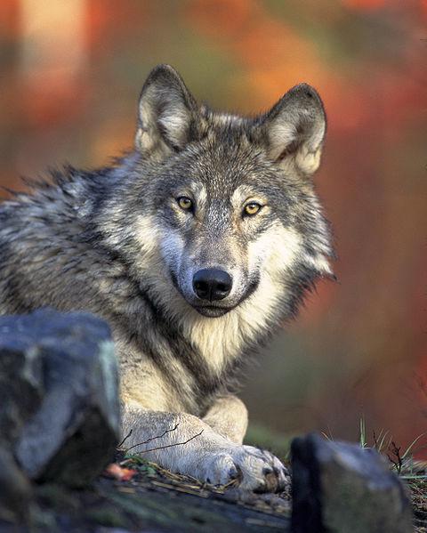Photo courtesy U.S. Fish & Wildlife Service.