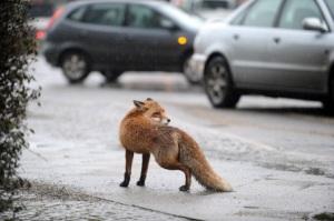 fox21546