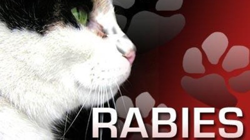 generic-rabies--640x360