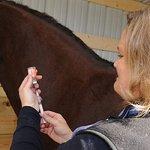 horse-vacinnation_0
