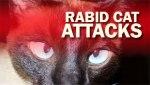 rabidcat