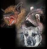 Rabies group 2