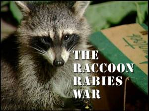raccoon photo odh