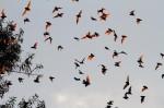 0113-bats-flyingW-1024x682