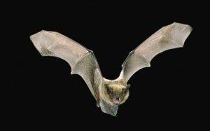 bats8773400g