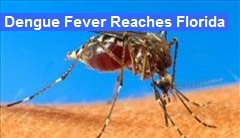 dengue-fever-reaches-florida