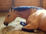 horses-temperature-800x800