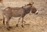 mini.donkey.freetouselicense