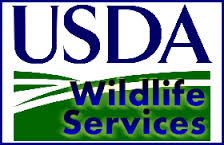 usda.wildlife.services