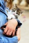 3243453-detail-of-girl-hugging-kitten-hand-and-paw-in-similar-position