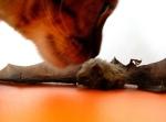 Cat-and-Bat