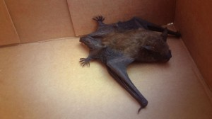 injured.bat4968fo