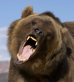 bear-attack.grizzly