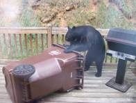 Bear-Residential3