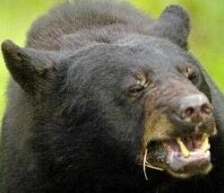 blackbear_1721930c-133