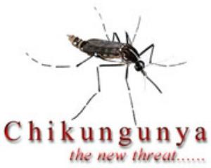 chikungunya091