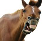 Horse%20Teeth