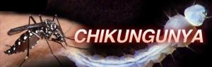pic_chikungunya
