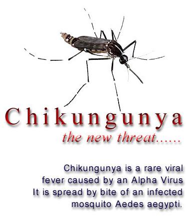 chikungunya_1